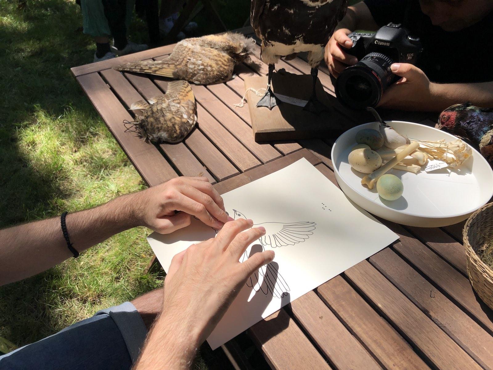 ciripituri-in-natura-desen-tactil