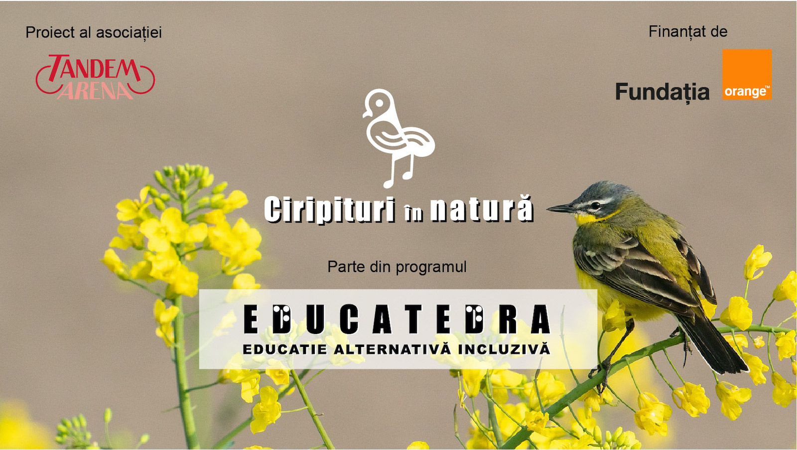 ciripituri-in-natura-fundatia-orange